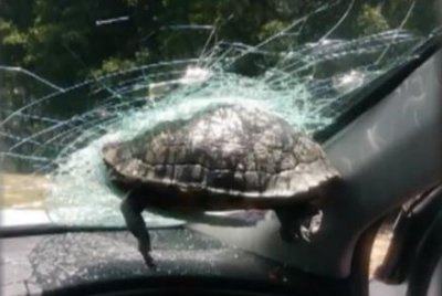 Turtle crashes through windshield on Georgia highway