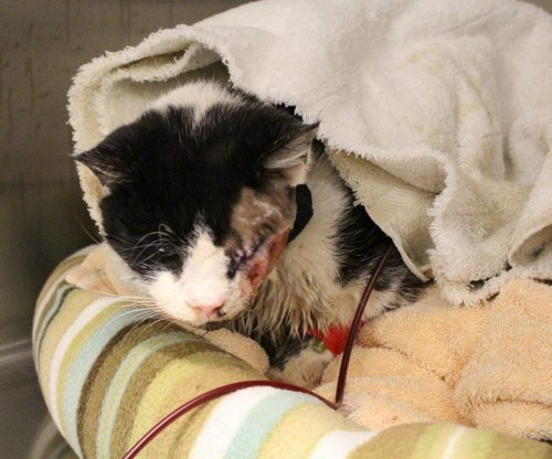Humane Society challenges owner over custody of cat presumed dead, buried alive