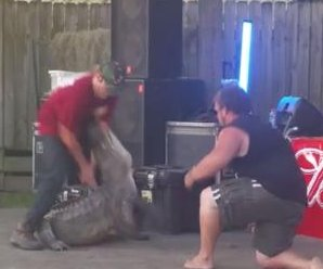 Alligator attacks trainer during Texas demonstration