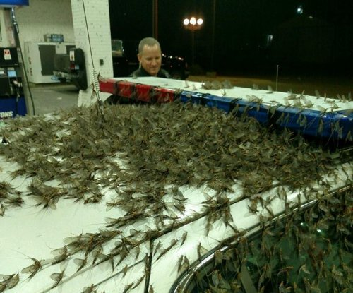 Illinois bridge turned slick by 6-inch-deep mayfly infestation