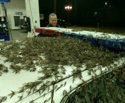 Illinois bridge turned slick by 6-inch-deep mayfly infestation