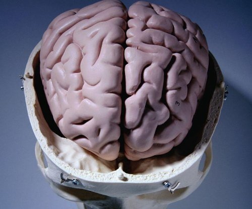 The brain can produce its own sugar: Report