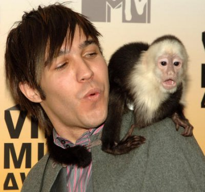Baby monkey calls played to lure monkey