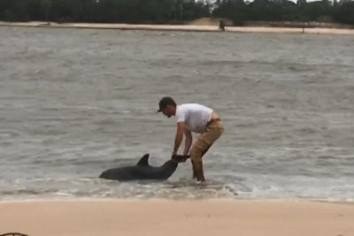 Florida man drags stranded dolphin out to sea