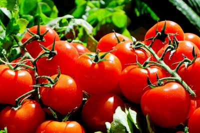 U.S. starts collecting tariffs on Mexican tomatoes