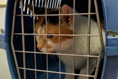 North Carolina family reunited with lost cat after four years