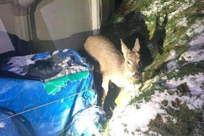 Firefighters rescue deer stuck in backyard pool