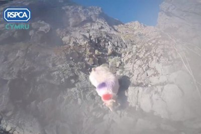 Rescuers rappel down cliff face to rescue stranded sheep