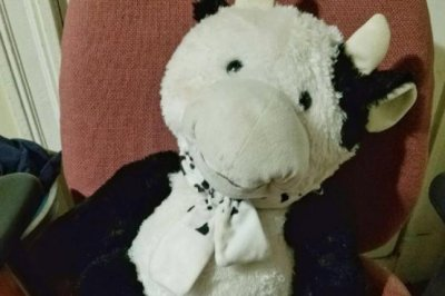 Stuffed cow breaks 16-foot fall for young boy in Massachusetts