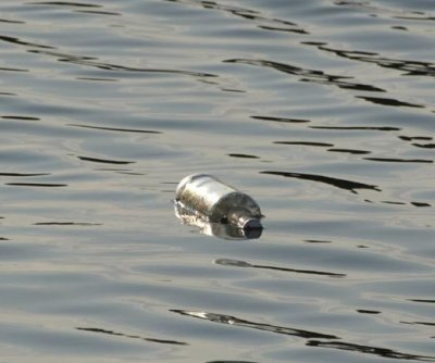 Message in a bottle found in Texas river after 31 years