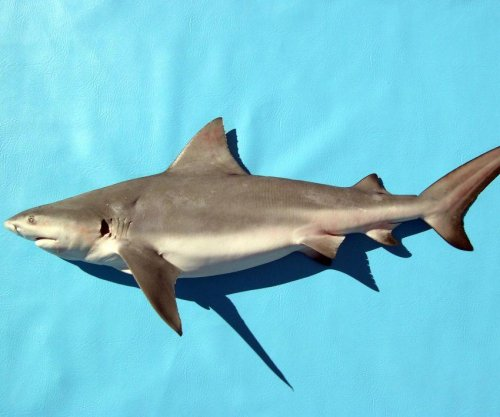Shark scavenging analysis aids the study of human remains