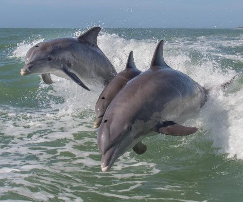 Rare dolphin 'stampede' shocks whale-watchers