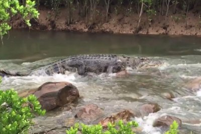'Monster' crocodile recorded 'white water rafting' in Australia