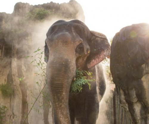 Oregon Zoo mourns death of beloved elephant, Packy
