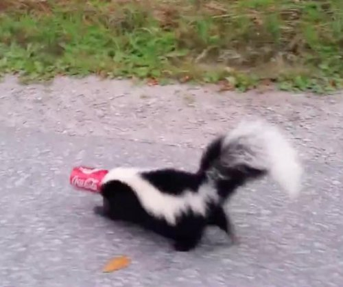 'Brave' man rescues skunk with head stuck in Coke can