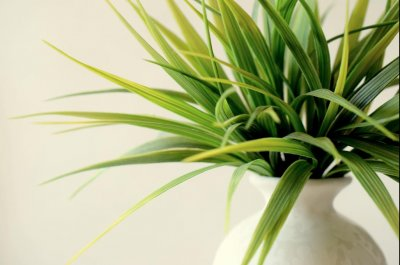Plants are ineffective at maintaining indoor air quality