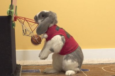 Bini the basketball bunny sets slam dunk world record