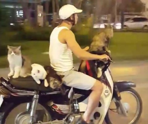 'Cat lord' rides motorcycle with four feline passengers