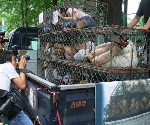 New attitudes toward dogs and meat drive animal activism in South Korea