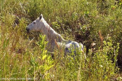 Elderly horse hoisted from watery ditch in Florida