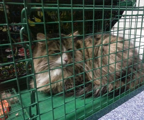 Cat missing for a year found living in pet food warehouse
