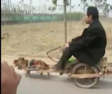 Man in small cart pulled by tiny dog at side of Chinese road