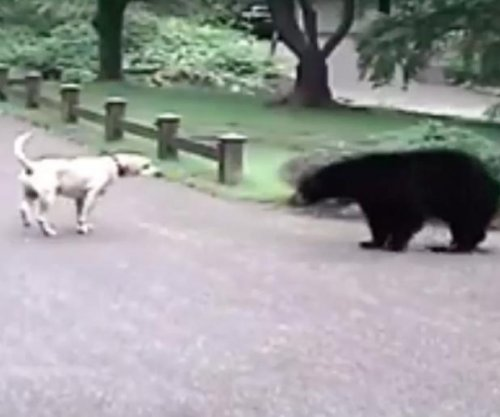 Brave dog scares off curious bear from Washington neighborhood