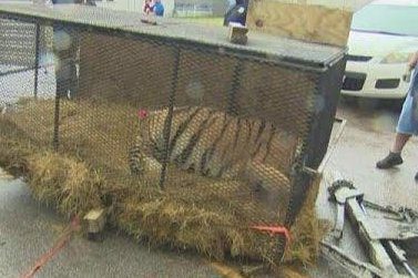 Marijuana smokers find tiger in vacant Houston home