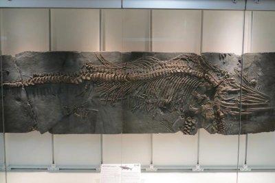Diversity of marine reptiles divvied up the Mesozoic seas