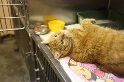 Massachusetts woman's lost cat turns up six years later