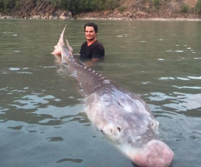 Canadian fishing tour catch 600-pound 'Pig Nose' fish