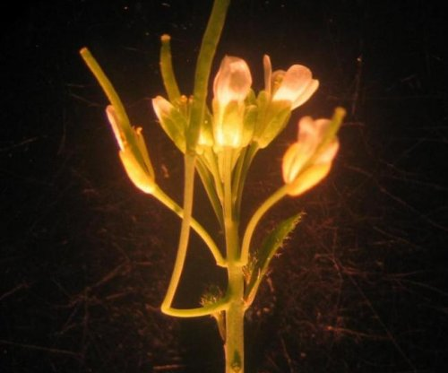 Botanists discover previously unknown plant body part