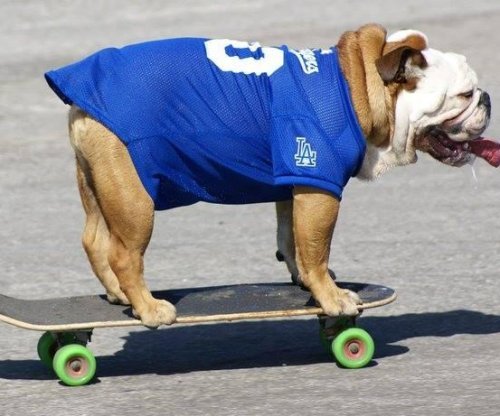 Tillman the skateboarding bulldog dies at 10