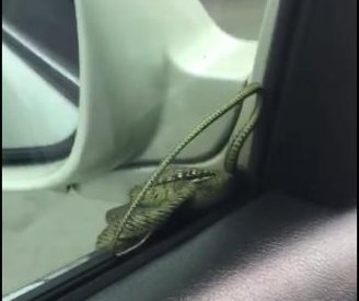 'Uninvited' snake hitches a ride in driver's side mirror