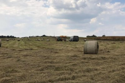 Farmers struggle to find hay for animals as wet spring creates shortage