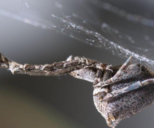 Garden spider spins electrically charged nano-scale filaments