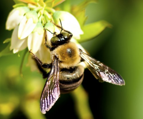 Almond-crop fungicides are harmful to honey bees