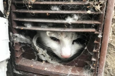 Butter, popsicle stick used to rescue cat from dryer vent