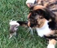 Barn cat strikes up unlikely friendship with mouse