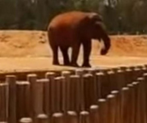 Elephant kills girl by flinging rock at Moroccan zoo