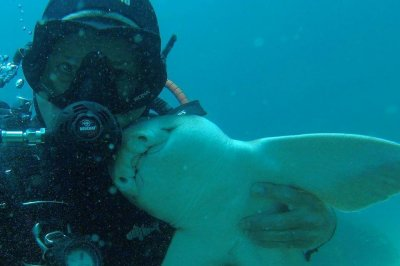 Australian diver forms years-long friendship with cuddle-loving shark