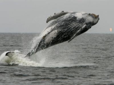 Whales off Africa increasingly encountering human activities