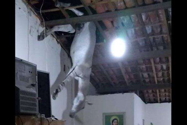 Watch Donkey Uninjured By Fall Through Roof Of House