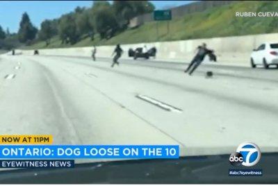 Loose dog blocks highway in California