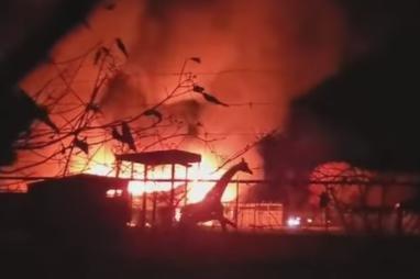 犯罪活动在俄亥俄州野生动物园火灾,造成10只动物不疑