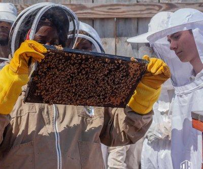 Beekeeping sweetens depressed economy in W.Va. coal country, Detroit