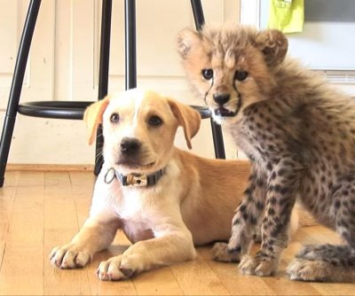Virginia zoo cheetah cub paired with rescue puppy