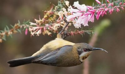 Flowers evolved colors to attract birds