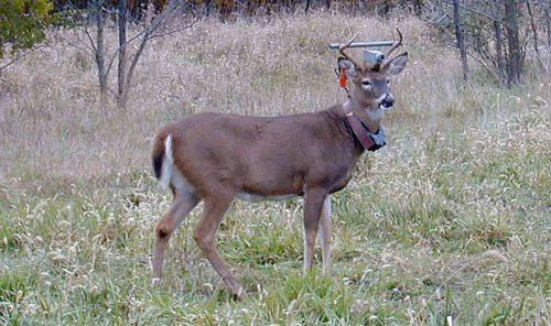 Deer inflicts $3,000 in damage during brief visit to liquor store in Weymouth, Mass.