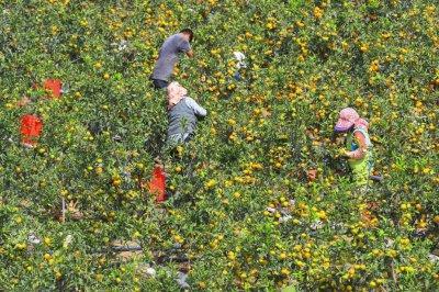 Seoul sends tangerines to Pyongyang in return for mushrooms